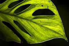 Ways of Nature (Marco Abud) Tags: sun verde planta nature natureza folha biome raiosdesol bioma marcoabudfotografia marcoabud