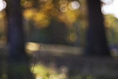heaven and earth (Lamson Noswen) Tags: light forest spring bokeh c hill impression lamson earlyspring heavenandearth trioplan clamson