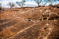 Tell me a story (Culinary Fool) Tags: june rock hawaii lava ancient drawings historical bigisland petroglyph 2012 maunalani culinaryfool 2470mm28 brendajpederson puakpetroglypharcheologicalpreserve