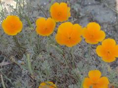 CIMG6457 (kazadmanesh) Tags: و بهار خشکسالی