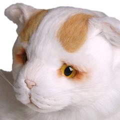 Plush / Stuffed Animal Turkish Van (Piutre) Tags: italy cats animal cat stuffed hand plush made plushie turkishvan