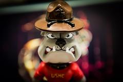 Semper Fido! (R24KBerg Photos) Tags: dog closeup usmc military teeth anger bulldog mascot di marines bobblehead figurine growl marinecorps snarl semperfi 2015 semperfidelis drillinstructor
