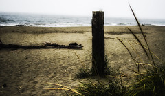 PACIFIC NORTHWEST 32 (Detective Steve) Tags: plants abandoned beach nature grass solitude neglected pacificnorthwest oceanshores natureycrap
