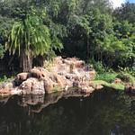 Disney's Animal Kingdom thumbnail