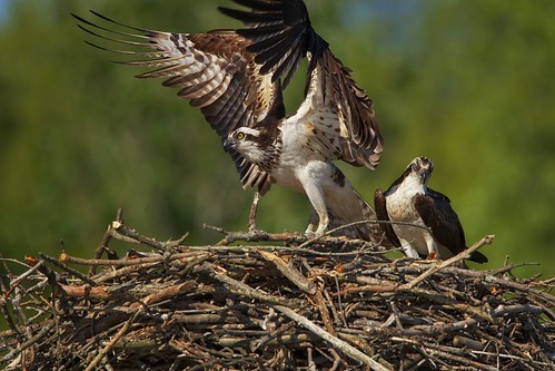 Mom leaving the nest