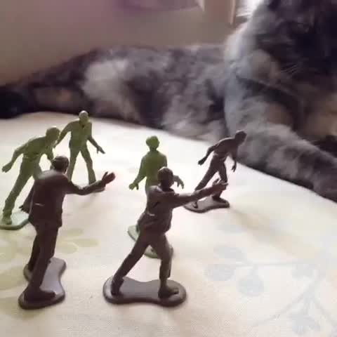 walkers vs cat (the walking dead)