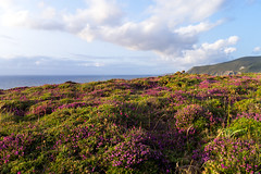 Coast of contrasts (Testigo Indirecto) Tags: pink sea wild seascape coast spain natural cliffs east galicia vegetation contrasts vegetacin acantilados salvaje loiba