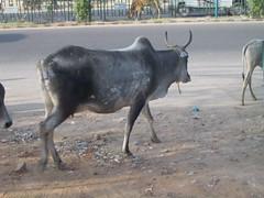 india_delhi_26.jpg