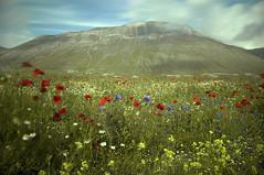 Come fiori al vento.. (Artom88 (Marco Taussi)) Tags: longexposure italy mountain landscape marche paesaggio umbria castelluccio sibillini vettore parconazionaledeimontisibillini nikond90 umbriamarche