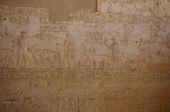 Tomb of Petosiris 20 (eLaReF) Tags: egypt tombs isadora ibex elgebel tunaelgebel petosiris tunaelgebbel