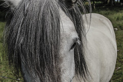 Horse (Kobi W.) Tags: ocean park street new old city uk trip travel family flowers autumn trees winter light sunset red sea summer vacation portrait england sky people urban bw food sun white lake holiday snow chicago black paris france color berlin green london art fall love beach nature water car birds animals bike yellow rock architecture kids night clouds canon river garden landscape fun photography scotland photo spring europe day photos live blackandwhiteblue