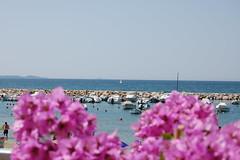 Follonica, bouganville e porticciolo (piumaviolablu) Tags: mare barche porto toscana grosseto golfo follonica 2013
