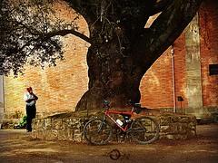 La Encina de San Martn de Cartes (dlmanrg) Tags: naturaleza nature arboles natural iglesias cartes patrimonio encina torrelavega rbolessingulares