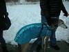 HornPond01-30-2011013
