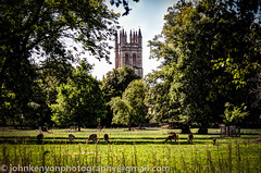 Magdalen College deer, Oxford (johnkenyonphotography@gmail.com) Tags: nature university wildlife deer oxford oxfordshire