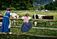 children and cows