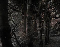 My secret Den (Dazzygidds) Tags: cumbria atmospheric backtonature ancienthedges levenshallandgardens theforestofdoom underthehedges exploringtrees