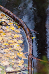 Leaf collector (Moo Moo Savaloy) Tags: leaf nikon nikkor 70300 d5100