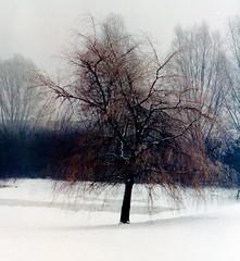 winter in holland (11) (bertknot) Tags: winter winterinholland