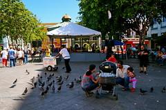 (Elisas caramel) Tags: street old streets de photography san juan feeding short sharing stories doves helados compartir carritos compartiendo