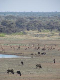 Namibia Safari - Lake Lodge 33
