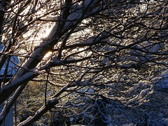 Branches covered with snow (EilaK: Visit my nice galleries too!) Tags: winter snowybranches lumisetoksat