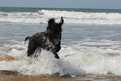 Barney's first time in the sea