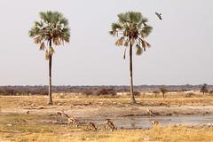 Gemini (Roberto Valt) Tags: panorama canon landscape landscapes scenario namibia paesaggi paesaggio canon7d