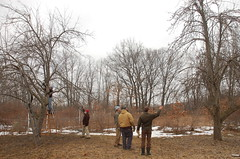 "Apple Pruning Party <a style=""margin-left:10px; font-size:0.8em;"" href=""http://www.flickr.com/photos/91915217@N00/13528335603/"" target=""_blank"">@flickr</a>"