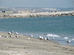 La Lnea De La Concepcin (Cdiz) (*KukiCat*) Tags: espaa azul mar andaluca barcos playa arena cielo barcas cdiz gabiotas lalneadelaconcepcin surdeespaa