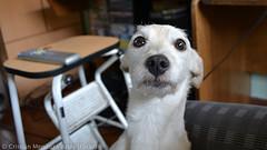 Sr. Pirilofo ([Laughing Man]) Tags: dog amigo friend perro señor pirilofo