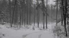 Snowy Sunday (Jan Zielinski) Tags: norway holte water stream flow winter winterflow winterstream copyright2017janzielinski janzielinski timelapse time lapse landscape scenery wind frost lx100 lumix sowysunday snowy sunday