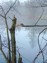Three Creeks Metro Park (Dan Keck) Tags: columbus franklincounty pond turtlepond water fog reflection