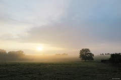 With hope (nathaliedunaigre) Tags: aube aurore sunrise paysage landscape sun soleil mist misty brume brumeux campagne country trees arbres
