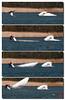 Des désalages de Laser dans la bonne humeur.... (mamnic47 - Over 8 millions views.Thks!) Tags: saintquentinenyvelines yvelines voilier basenautique désalages img3629m laser roselière étang
