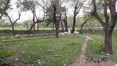 #Narryab #KPK #Pakistan (Shaheen Mushtaq Naryabi) Tags: narryab kpk pakistan