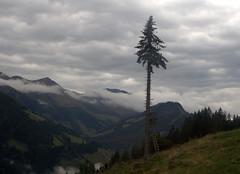 1-IMG_8438 (hemingwayfoto) Tags: österreich alpen austria baum hochsitz hohetauern nationalpark rauris rauristal wolken