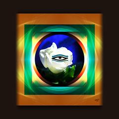 Evil Eye (mfuata) Tags: evil eye nazar bakış göz gül beyaz rose center simetri merkez symmetry