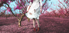 Rising against reality (Siréliss) Tags: siréliss alice wonderland pink orchard verger rose woman tutu