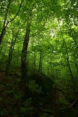 (eflon) Tags: ny newyork tree green forest moss spring adirondacks boulder ferns bog ferds