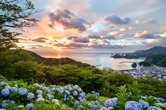 Sunset at Hydrangea Hills [Explore] (-TommyTsutsui- [nextBlessing]) Tags: blue light sunset sea sky orange cloud 3 flower green nature japan port landscape bay coast town nikon purple tide scenic explore hydrangea      islet izu earlysummer  410   matsuzaki sigma1020  onsalegettyimages