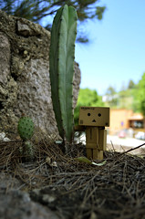 Revoltech Danbo & Mr. Cactus (joxmar83) Tags: friends cactus mexico outdoor guanajuato danbo revoltechdanbo