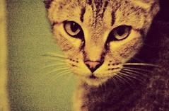 Musa Nocturna. (Marta Marley) Tags: nocturna gata marta marley musa felina callejera