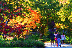 Enjoy the autumn colours with friends () Tags: autumn trees girls friends people canada fall colors gardens kids vancouver sisters children october colorful britishcolumbia sunny autumncolours m43 vandusenbotanicalgarden mirrorless microfourthirds olympusm14150mmf4056 olympusomdem5