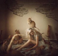 The Hoarder (Samantha T.) Tags: orange pet cats girl tabby kitty dirty collection kitties clone hoarder catlover