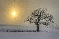 Upstate Weather (Matt Champlin) Tags: life christmas winter sun holiday snow cold nature field weather canon oak quiet peace open farm farming snowstorm warmth peaceful auburn calm upstatenewyork snowing tranquil lakeeffectsnow 2013 thewayahead lonetreeinfield