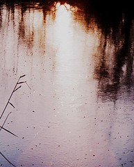 a new beginning! (♥Adriënne - catching up......) Tags: natuurreservaat debraakman reflectionsofmylife winterinthenetherlands addyvanrooij bokehoflight ♥adriënne gezondenmooinieuwjaar2014 newyearsreflections