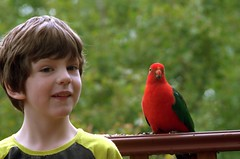 With a friend (Occasionally Focused) Tags: red people nature birds animal bright pentax takumar parrot colourful kingparrot 135mm k30 smctakumar135135