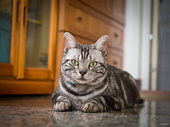 破許 (阿喃) Tags: cat taiwan olympus 貓 omd em5 1240mm mzuiko 破許