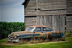 Visiting an old friend -  Rochelle IL (Meridith112) Tags: wood old summer car barn illinois corn nikon rust midwest rusty july cadillac il cornstalks vehicle weathered oldcar 1950 patina rochelle lincolnhighway 2015 oldvehicle route38 oglecounty oldcadillac 1950cadillac nikon2485 torcwori 1950cadillacseries62 1950cadillacseries62sedan4doorhardtop nikond610 492015 1950cadillacseries62sedan4door 1950cadillacseries62sedan theoldrustycadillacwestofrohelleillinois